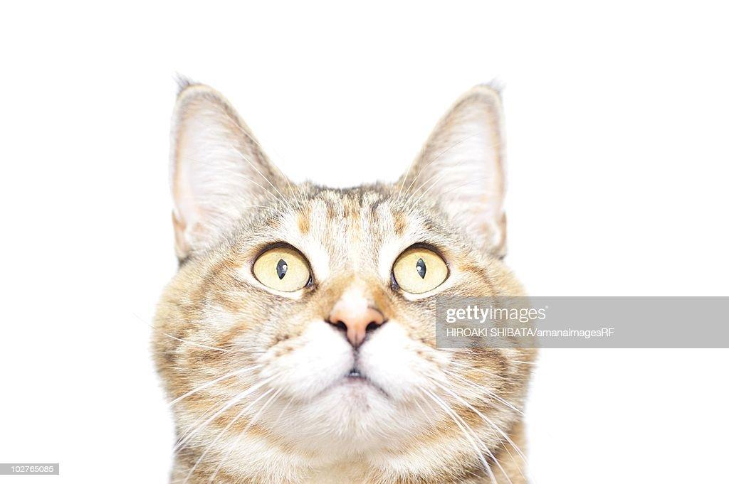 Tabby cat : Stock Photo