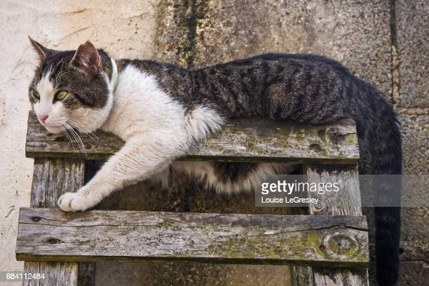 Tabby cat relaxing on the top of a wooden ladder