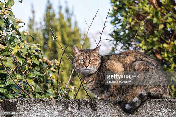 Tabby cat sitting on a stone wall