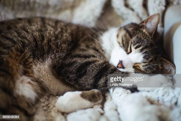 A tabby cat that sleeps comfortably