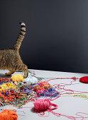 Getigerte Katze Katze Spaziergang entfernt von Haufen von Unordentlich bunte Wolle