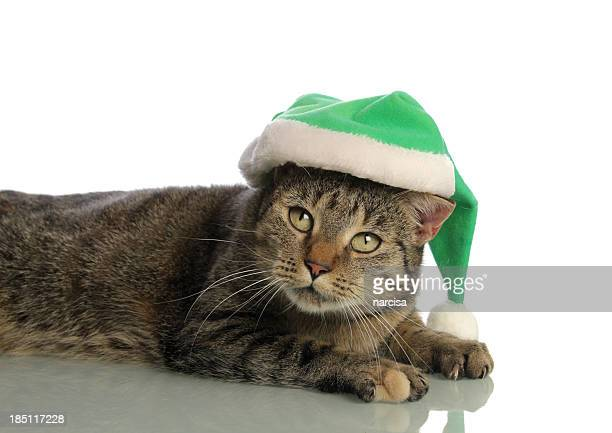 Tabby cat with green santa hat isolated on white