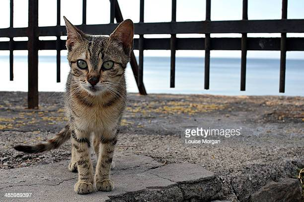 Tabby Kitten in Sorrento