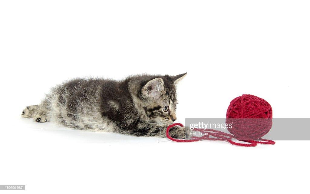 Tabby kitten with yarn : Stock Photo