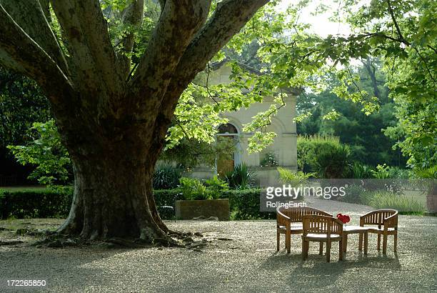 Table sous un arbre