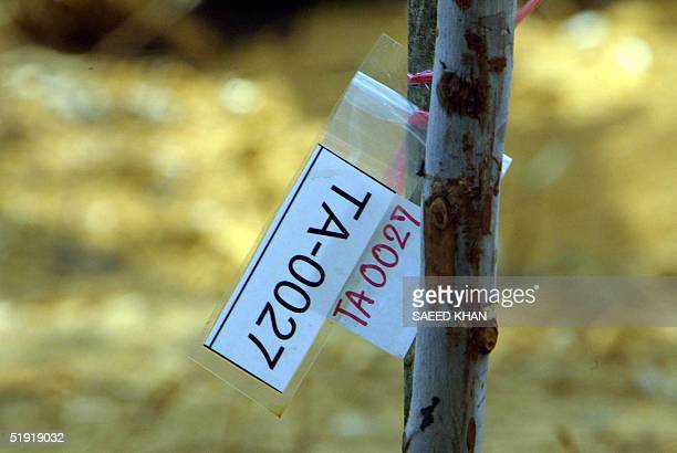 A tag of DNA and other tests of a dead person hangs on a stick at a mass grave in Bang Mak Roang temple in Takuapa 06 January 2005 Thailand struggled...