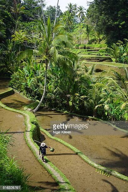 Tagallalang rice terraces