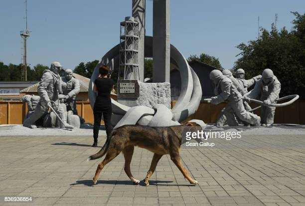 A tagged stray dog walks past a tourist at a monument to firemen who fought to contain the 1986 Chernobyl nuclear disaster inside the exclusion zone...