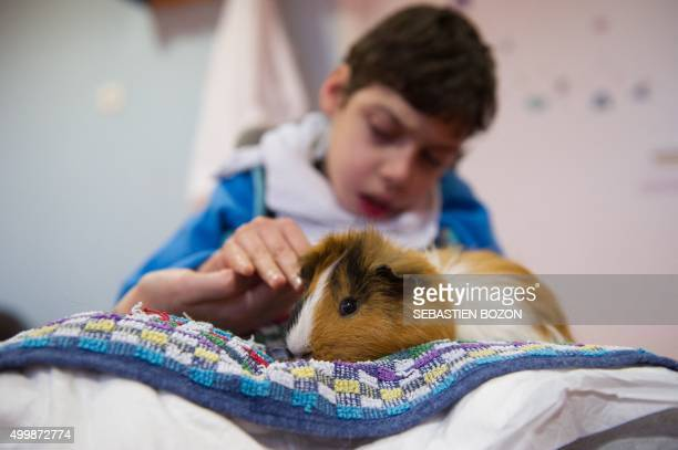 Taha a child with multiple disabilities takes part in a session of animalassisted therapy with a Guinea pig named Moustique at the 'Association...
