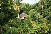 Tahitian jungle hut