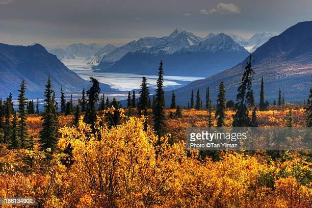 Taiga, glacier, and Chugach Mountains