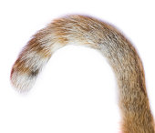 tail of a cat on white background