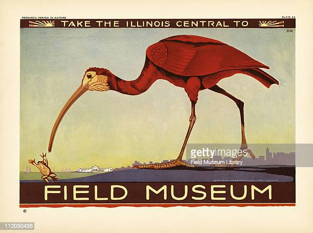 Take the Illinois Central to Field Museum poster which includes a Scarlet Ibis with the Field Museum building and the Chicago skyline in the...