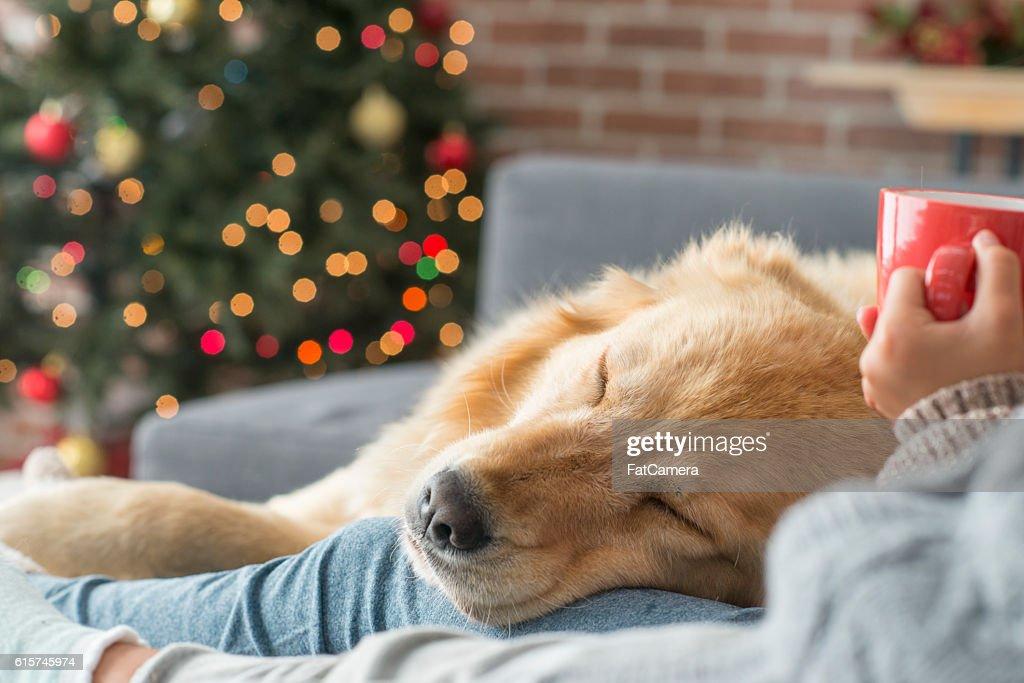 Taking a Nap : Stock Photo