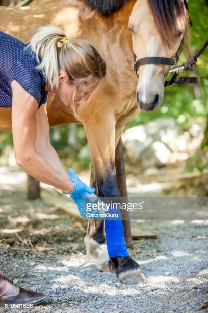 Taking Care of Injured Horse Leg