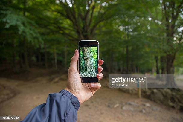 Taking pictures with smartphone to a big tree