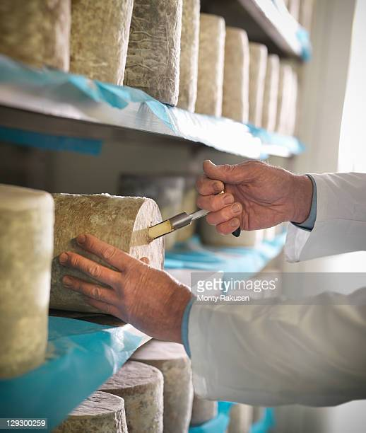 Taking sample of blue cheese in cheese-making factory