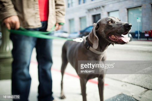 Taking the dog for a walk : Stock Photo