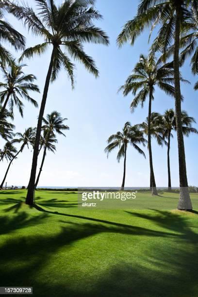 De hauts cocotiers les vacances de printemps