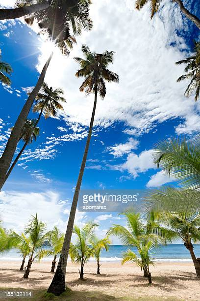 Tall coconut trees on a Caribbean island beach