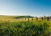 Tall Dewy Grass in Rolling Hills of Kentucky along a black fence