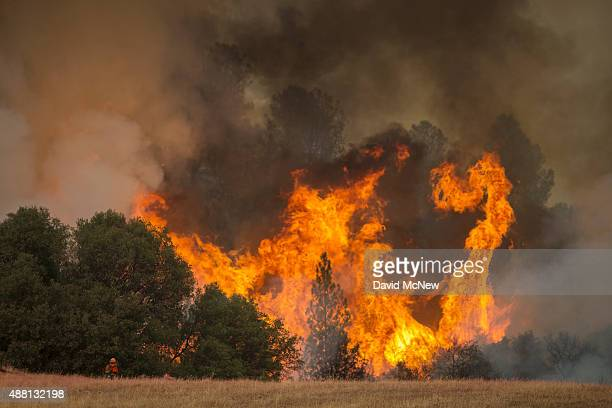 Tall flames rise behind a firefighting inmate hand crew member at the Butte Fire are seen on September 13 2015 near San Andreas California California...