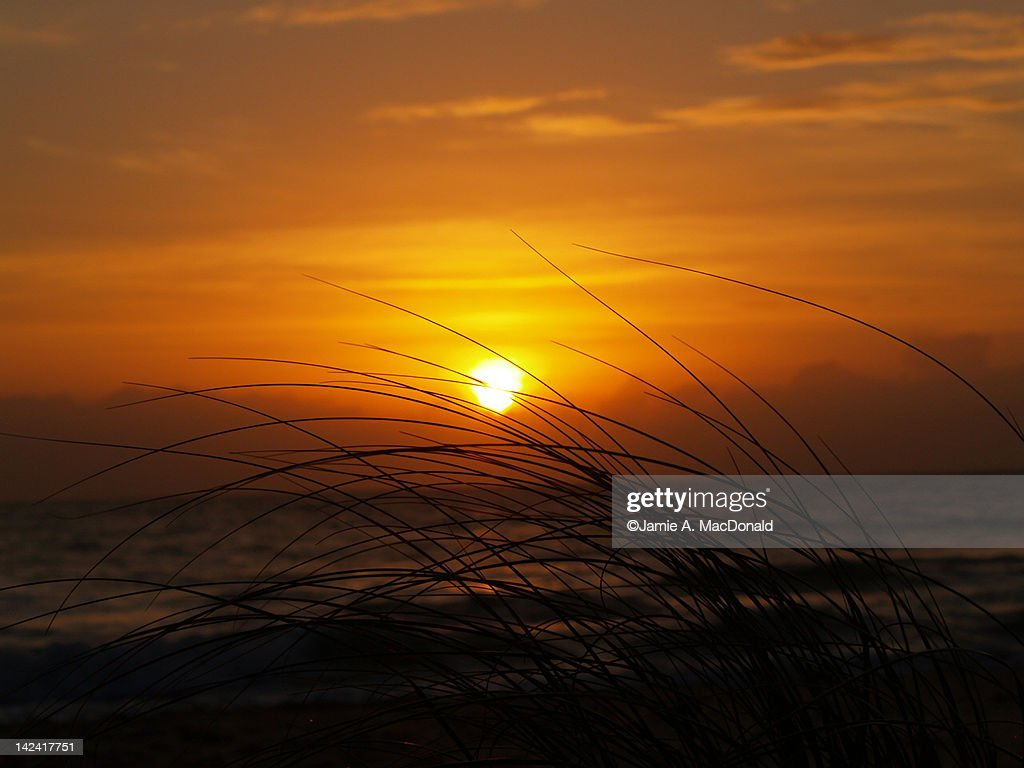 Tall grass against sea at sunset : Stock Photo