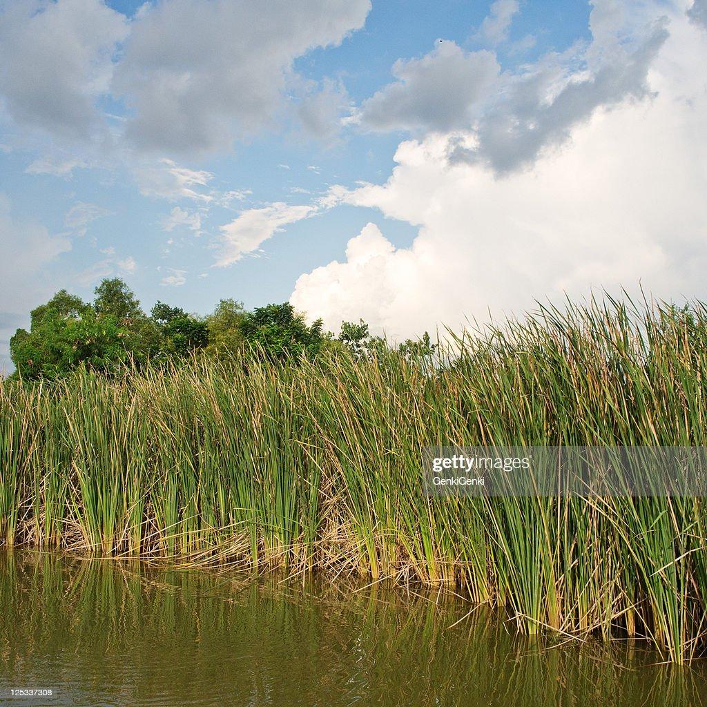 2560x1600 river grass cloudy - photo #3