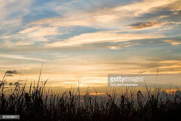 Tall Grass Sky