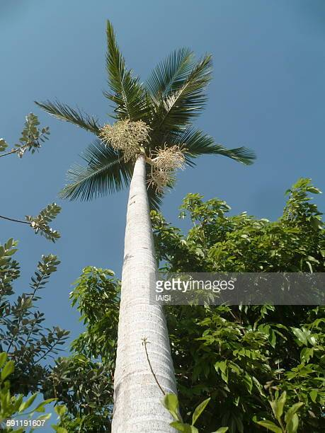 Tall palm tree against sky