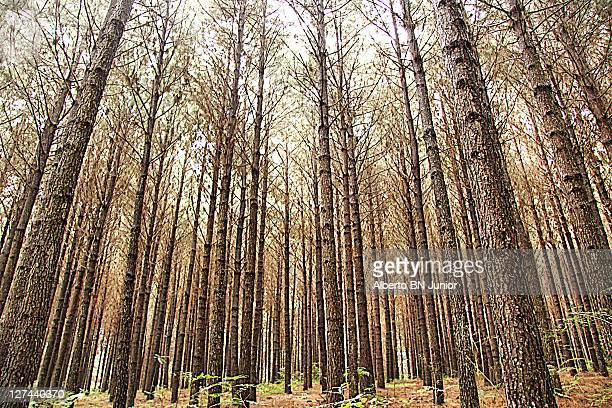Tall tree in forest
