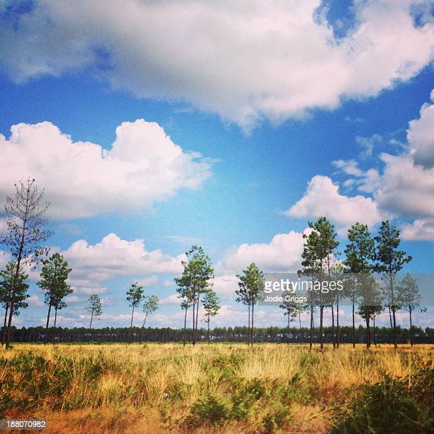Tall trees & grass land beneath large white clouds