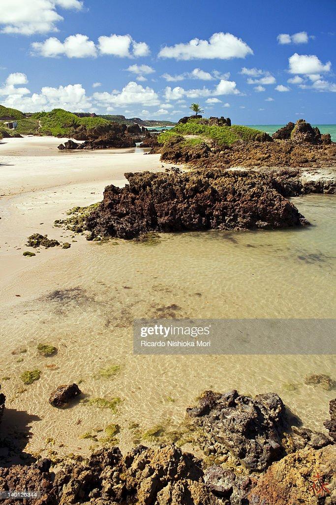 Tambaba beach : Stock Photo