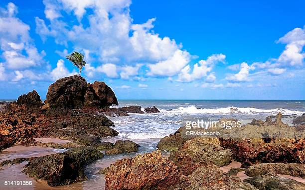 Tambaba beach
