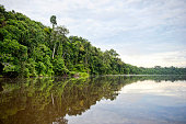 A view of the river at Tambopata Province in the Amazon.