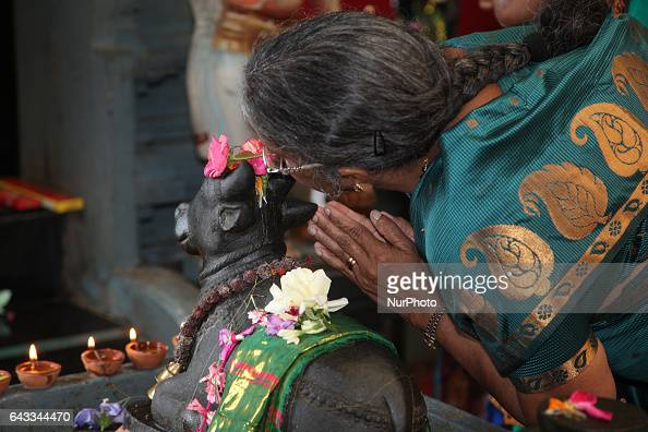 Tamil Hindu woman whispers her wish in the ear of the bull Nandi at a Hindu temple in Ontario Canada It is believed that by whispering their prayers...