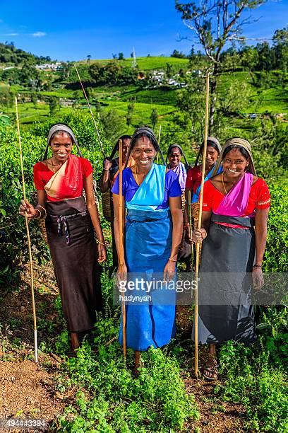 Tamil women plucking tea leaves on plantation, Ceylon