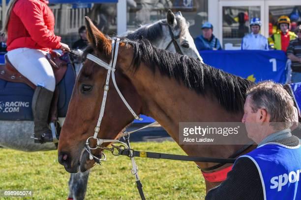 Taminga before the ECycle Solutions Maiden Hurdle at SportsbetBallarat Racecourse on June 15 2017 in Ballarat Australia