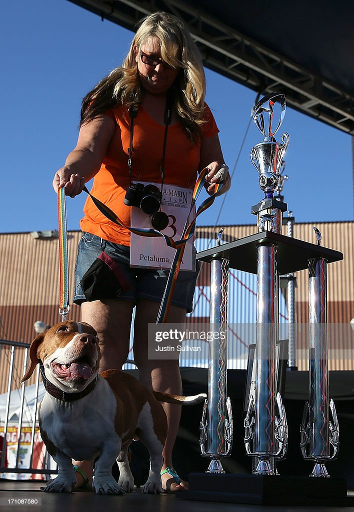Tammie Barbee stands with her dog Walle, a basset beagle mix, during the 25th annual World's Ugliest Dog contest at the Sonoma Marin Fair on June 21, 2013 in Petaluma, California. Walle, a basset and beagle mix won the honor of being the world's ugliest dog.