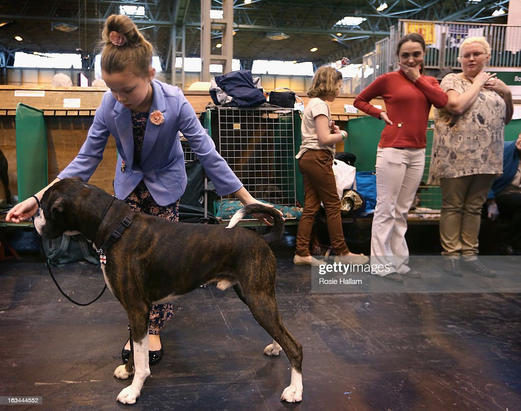Tamsin Blyton, 9, from Nottingham with her boxer named Albert prepare to show during the final day at Crufts Dog Show on March 10, 2013 in Birmingham, England. During this year's four-day competition over 22,000 dogs and their owners will vie for a variety of accolades but ultimately seeking the coveted 'Best In Show'.