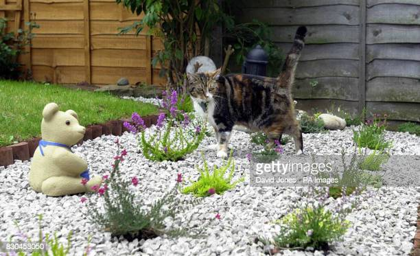Tamworth murder victim Heather Tell's cat 'Bonnie' in the heather garden created in her memory at the family home Heather would have celebrated her...