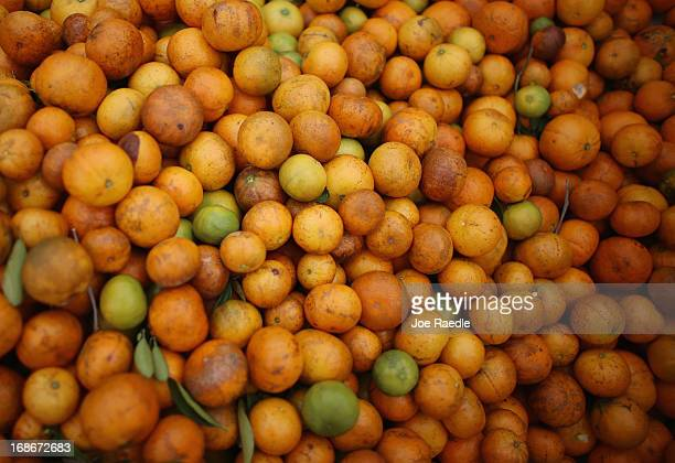 Tangerines are seen in a bin as the citrus industry tries to find a cure for the disease 'citrus greening' that is caused by the Asian citrus psyllid...