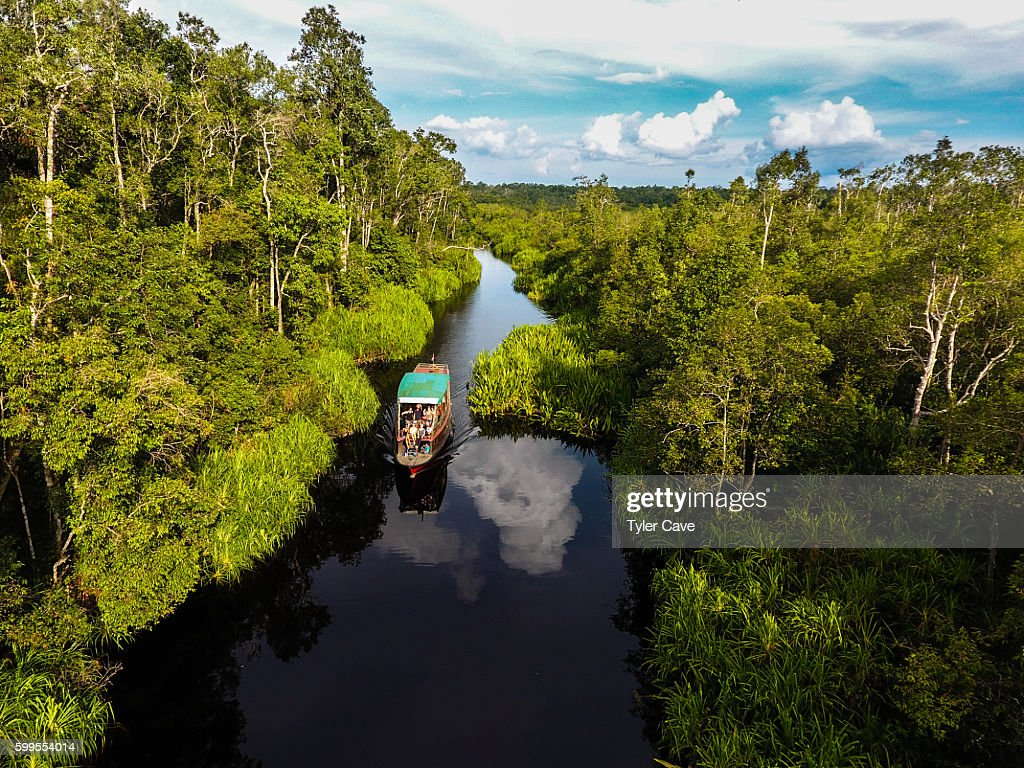 Tanjung Putting National Park : Stock Photo