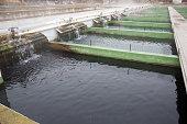 Tanks outdoors of farm for industrial breeding sturgeon fish