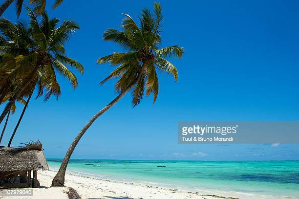 Tanzania, Zanzibar island, Jambiani beach