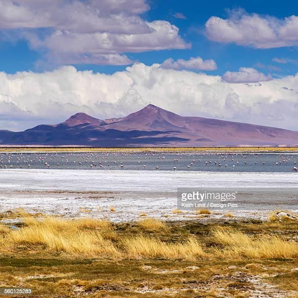 Tara Salt Flat, Salar de Atacama