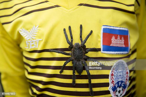 A tarantula sits on the chest of a boy wearing a Cambodia soccer supporter jersey in Skuon known as Spider Town in Kampong Cham province Cambodia on...