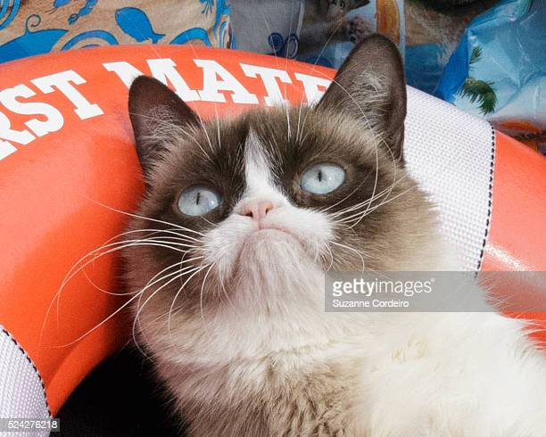 Tardar Sauce aka 'Grumpy Cat' and owner Tabatha Bundesen make a personal appearance at the Mashable House during the 2014 SXSW Music Film Interactive...
