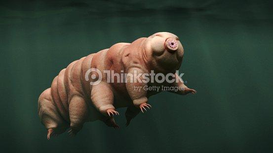 tardigrade, swimming water bear : Foto de stock