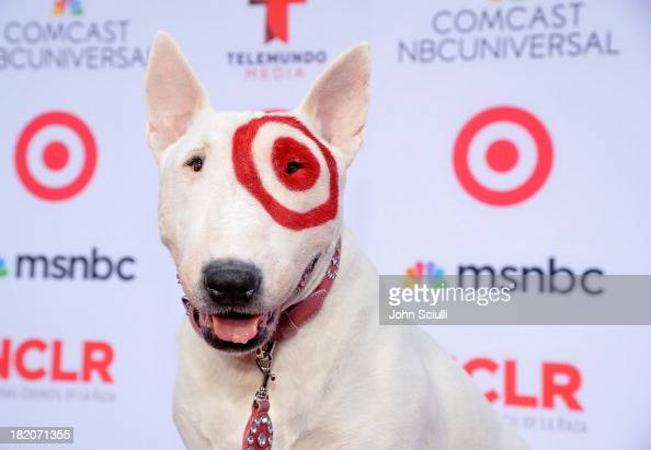 The target dog stock photos and pictures getty images What kind of dog is the target mascot